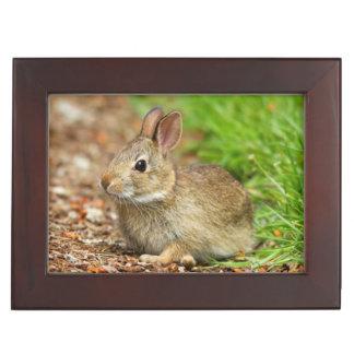 WA, Redmond, Eastern Cottontail baby rabbit Keepsake Box