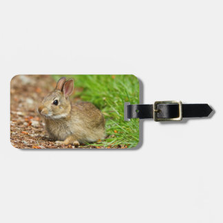 WA, Redmond, Eastern Cottontail baby rabbit Luggage Tag