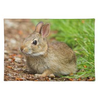 WA, Redmond, Eastern Cottontail baby rabbit Placemat