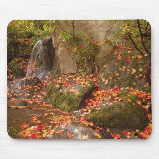 WA, Seattle, Washington Park Arboretum, Japanese Mousepad