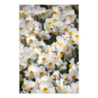 WA, Skagit Valley, Daffodil pattern Photo