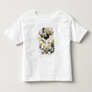WA, Skagit Valley, Daffodil pattern Toddler T-Shirt