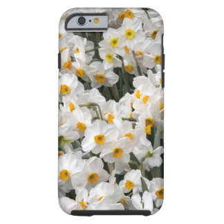 WA, Skagit Valley, Daffodil pattern Tough iPhone 6 Case