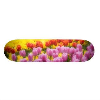 WA, Skagit Valley, Roozengaarde Tulip Garden, 2 21.6 Cm Skateboard Deck