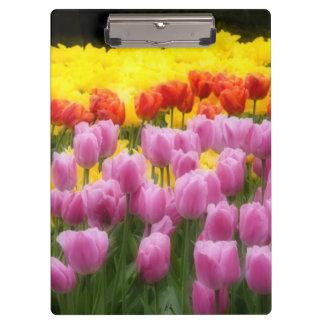 WA, Skagit Valley, Roozengaarde Tulip Garden, 2 Clipboards