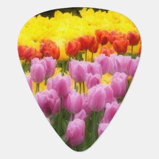 WA, Skagit Valley, Roozengaarde Tulip Garden, 2 Plectrum