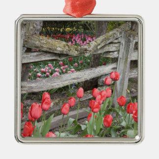WA, Skagit Valley, Roozengaarde Tulip Garden, Silver-Colored Square Decoration