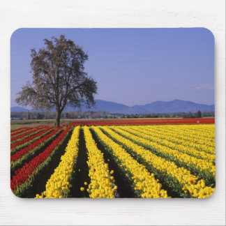 WA, Skagit Valley, Skagit Valley Tulip 2 Mouse Pad