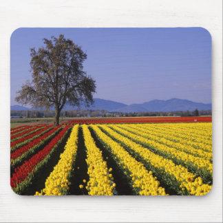 WA, Skagit Valley, Skagit Valley Tulip 2 Mouse Pad
