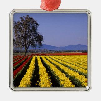 WA, Skagit Valley, Skagit Valley Tulip 2 Silver-Colored Square Decoration