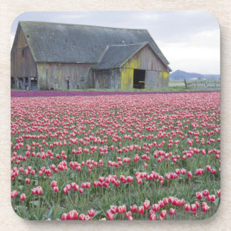 WA, Skagit Valley, Tulip Field and Barn Coaster