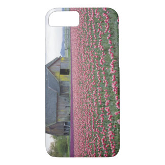 WA, Skagit Valley, Tulip Field and Barn iPhone 8/7 Case