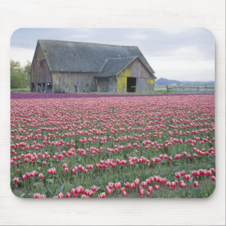 WA, Skagit Valley, Tulip Field and Barn Mouse Pad