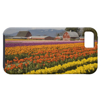 WA, Skagit Valley, Tulip fields in bloom, at iPhone 5 Cases
