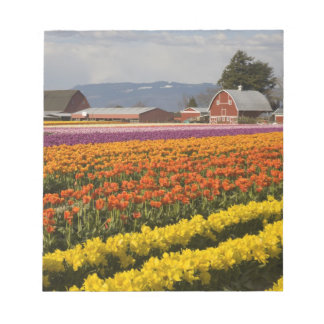 WA, Skagit Valley, Tulip fields in bloom, at Notepad