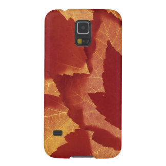 WA, Wenatchee National Forest, Maple leaf Galaxy S5 Covers