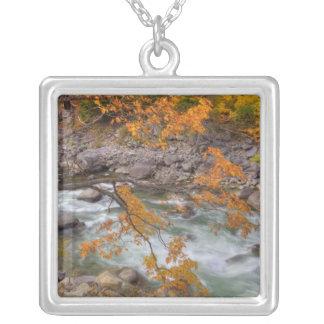 WA, Wenatchee National Forest, Maple tree and Custom Necklace