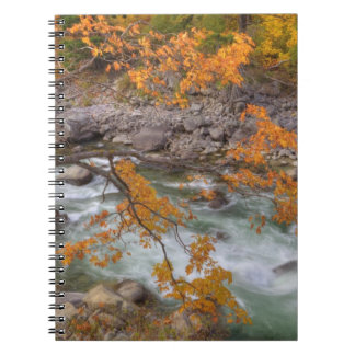 WA, Wenatchee National Forest, Maple tree and Notebook