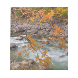 WA, Wenatchee National Forest, Maple tree and Notepad