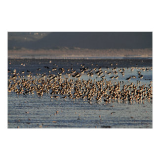 Waders on the Shore Print
