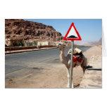 wadi rum camel stop cards