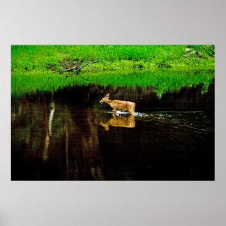 wading deer posters