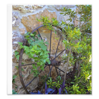 Wagon Wheel in Garden. Photo