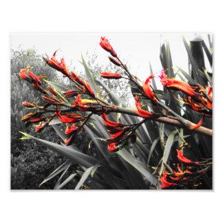 """"""" Waiheke Island"""" - Flax Flowers ART Photo Art"""
