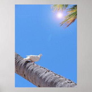 Waikiki Pigeon and Coconut Palms Poster