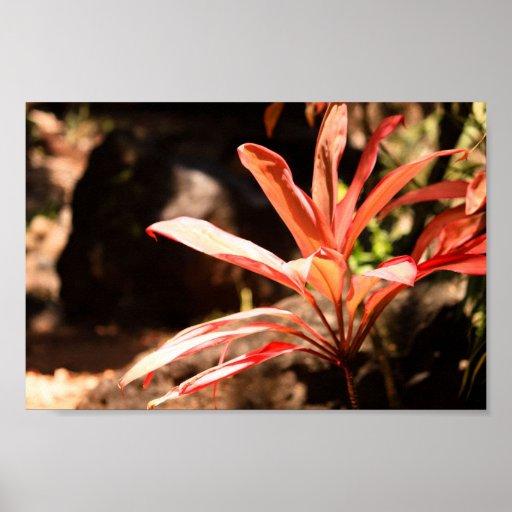 Waimea Botanical Garden Print