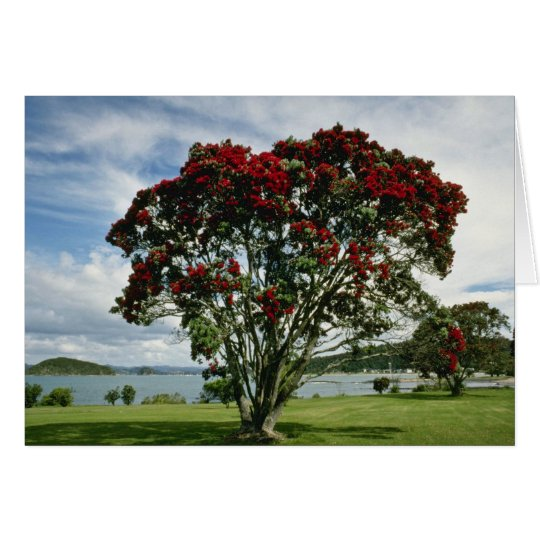 Waitangi, Christmas Tree, New Zealand flower Card