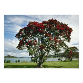 Waitangi, Christmas Tree, New Zealand flower Announcements