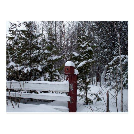 Waiting for Christmas-Bird House Postcard