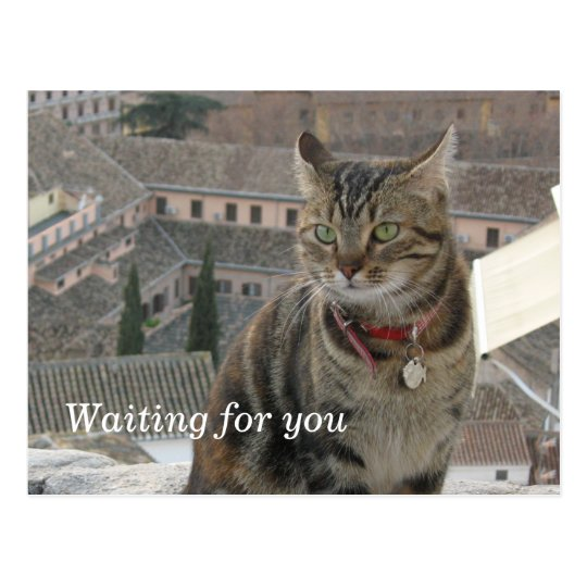 Waiting for you Postcard