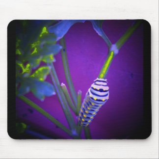 Waiting to be a swallowtail mouse pad