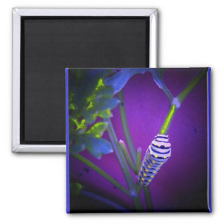 Waiting to be a swallowtail square magnet