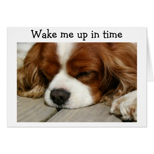 """WAKE ME UP IN TIME"" SAY SPANIEL BIRTHDAY"