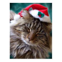 Wake Me Up Santa Cat Postcard
