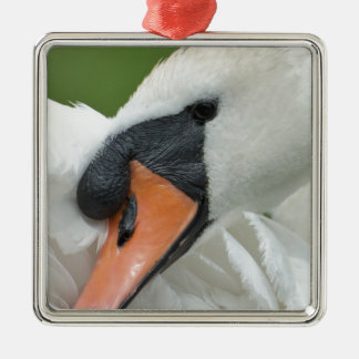 Waking swan christmas ornament