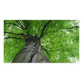 Walk In The Woods, Below A Huge Leafy Tree Business Card