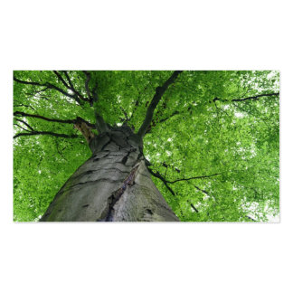 Walk In The Woods, Below A Huge Leafy Tree Pack Of Standard Business Cards