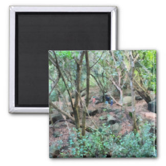 Walk in the woods square magnet