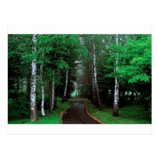 Walk Through The Forest Postcard