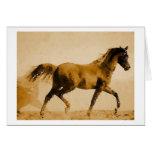 Walking Horse Pop Art Cards