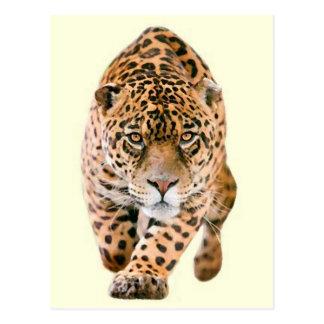 Walking Jaguar Eyes Postcard