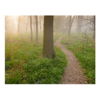Walking path leading into a forest postcard