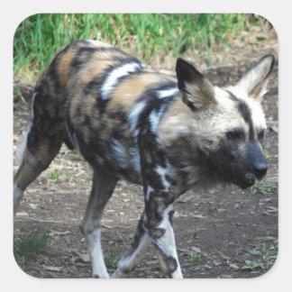 Walking Wild Dog Stickers