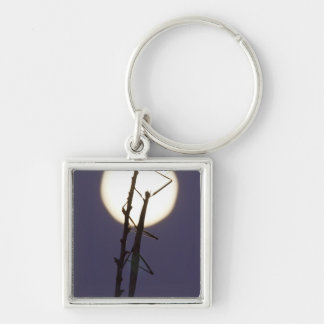 walkingstick and full moon in south Texas, USA Key Chains