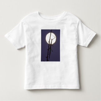 walkingstick and full moon in south Texas, USA Toddler T-Shirt