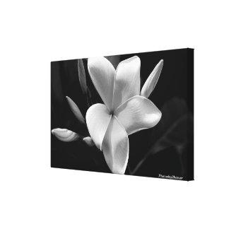 Wall art Black and White Frangipani Art photograph Canvas Print